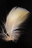 Feather of Mandarin Duck Royalty Free Stock Photos