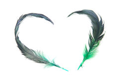 Feather Of Love Royalty Free Stock Image
