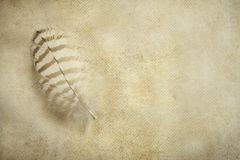 Feather and old paper Royalty Free Stock Image
