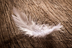 Feather on old wooden desk Stock Images