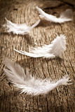 Feather on old wooden desk Royalty Free Stock Photos