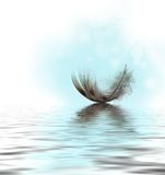 Feather On Water Stock Photo