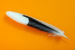 Feather on orange background Royalty Free Stock Images