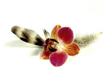Feather with orchid blossom Stock Photo