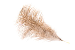 Feather of an ostrich Stock Photos