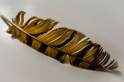 Feather. From owl. eagle owl Royalty Free Stock Image