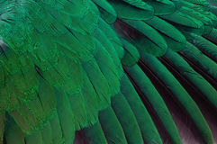Feather of parrot Stock Photo