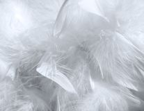 Feather pattern Stock Photos