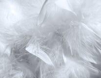 Feather pattern stock photos