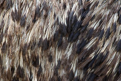 Feather pattern background Royalty Free Stock Image