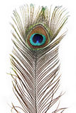 Feather Peacock Royalty Free Stock Images