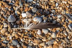 A Feather on a Pebble Beach royalty free stock photography