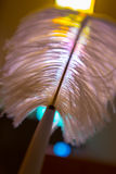 Feather pen. Detail Royalty Free Stock Image