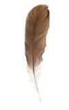 Feather Pen Isolated On White Stock Photos