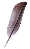 Feather. Pen. Isolated on a white background Stock Images