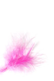 Feather pink Stock Images