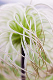 The feather plant in the steppe Stock Photos