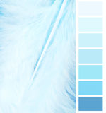 Feather plumage blue color chart. Selection for interior Royalty Free Stock Image