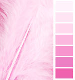 Feather plumage pink color. Chart selection for interior stock photography