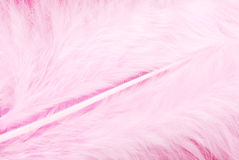 Feather plumage pink texture Stock Images