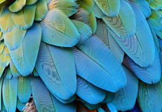 Feather. The portrait of macaw feather Royalty Free Stock Image