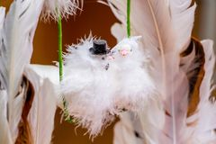 Feather product -  happy young couple,  bride and groom, in  for. M of birds Royalty Free Stock Image