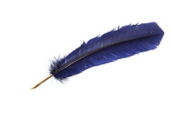 Feather quill Royalty Free Stock Photo