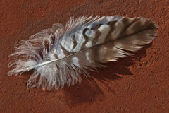 Feather on red clinker Stock Images