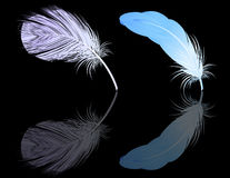 Feather reflection Royalty Free Stock Image