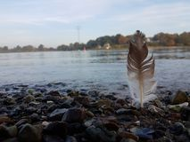 Brown white feather at the rocky coastline royalty free stock photography