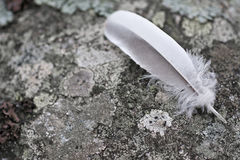 Feather on rock. Nice white gray feather laying on a stone in the middle of the forrest Stock Photos