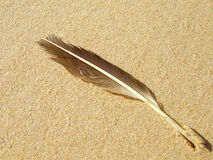 Feather in sand Stock Image
