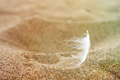 Feather on sand Royalty Free Stock Image