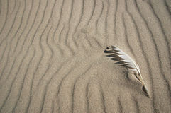 Feather on the sand. White feather on the sand Stock Image
