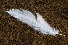 Feather on the sand. Feather of gull on the sand of the beach Stock Photos