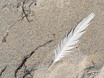Feather on the sand from beach Royalty Free Stock Photo