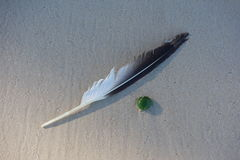 Feather in the Sand Royalty Free Stock Photo