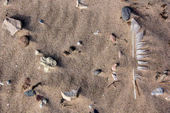 Feather in sea sand Stock Photography