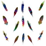 Feather set. Set bird's feather (abstract color feather) isolated white background Vector Illustration