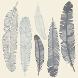 Feather Set Royalty Free Stock Photo