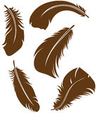 Feather Set. Doodle style. Vector Stock Images