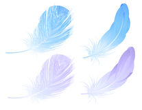 Feather set Stock Images