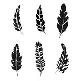 Feather set. Black silhouette feather vector illustration Royalty Free Stock Image