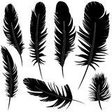 Feather set vector illustration sketch Royalty Free Stock Photo