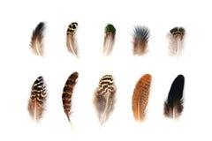 Feather Set on White Background. Feather set isolated on white background. Natural and ethnic elements. Bird feathers pattern stock photos