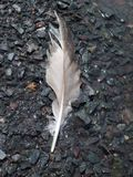 Feather On The Shoreline Stock Photo