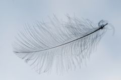 Feather silhouette Stock Photo