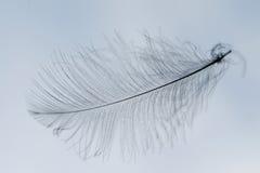 Feather silhouette Stock Photo
