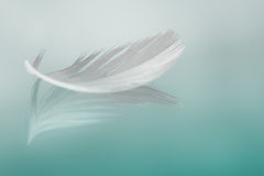 Feather. Simple backgrouns with a single white feather Royalty Free Stock Photos