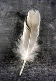 Feather Stock Images